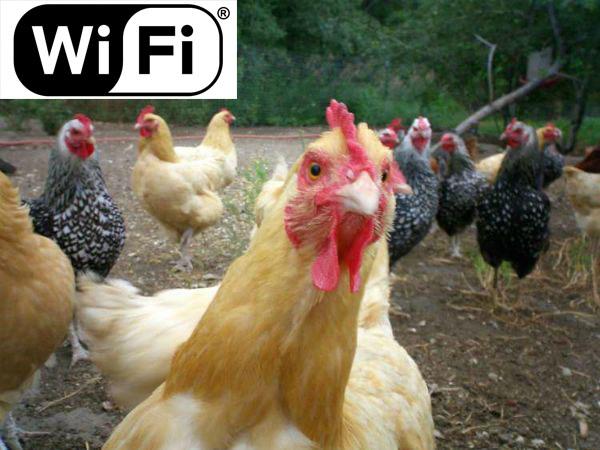 Управление курятником через WiFi
